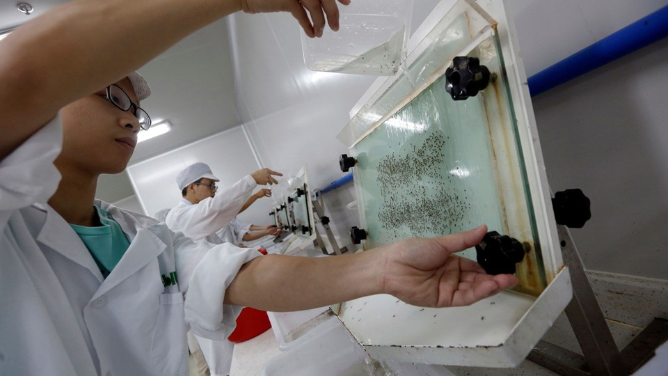 Lab technicians work at a Foto: Reuters/Bobby Yip